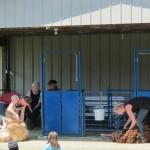 More Sheep Shearing