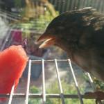 Colette Eating