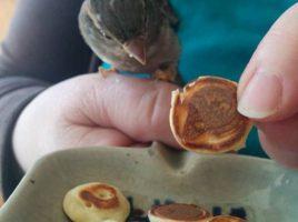 Bird Pancakes