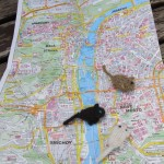 Knit Gerbils Exploring a Map