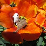 Gerbils Playing in the Tulips