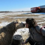 Deborah kissing sheep