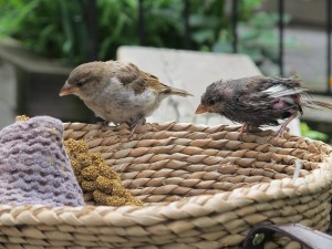 T015-BirdsonNest
